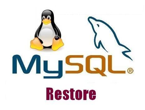 ریستور کردن MySQL دیتابیس